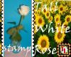 tall white rose stamp