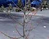Snowy Tree w/Lights
