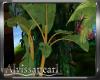 Bali Break Banana Tree