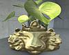 Golden Lion Plant