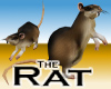 Rat -v1a