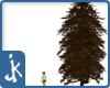 Dead Pine Tree (2)