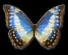 Flying Butterflies Azure
