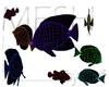 Reef Fish MESH