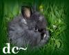 dc~ Starlite Grey Bunny