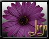 Purple Gerbra Sticker
