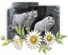White Wolfs 2