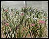 .:Hello Flowers:.