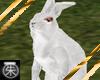 }T{Snow Bunny