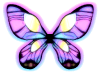 Tie dyed butterfly