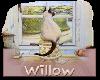 Willow kitty Sticker