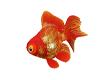 Animat. Fish
