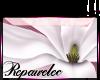 *R* W Magnolia Sticker
