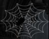 Spider & Web *Derivable