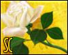 SC|White Rose (L)