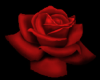 tiny red rose