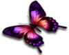 red/pink butterfly R