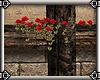~E- Wall Top Roses