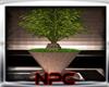 Plants -Planta palmera