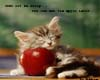 Kitten with Apple