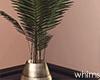 Gurl! Palm Plant