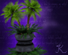Potted Palms R