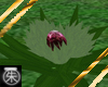 }T{ Artichoke plant