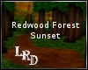 [LR]RedwoodForestSunset