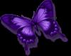 small violet butterflyR
