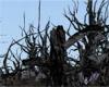 [dani]Black Bat Tree
