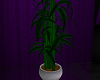 [AG] E Plant 7