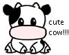 CUTE COW!!!