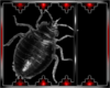 Drax pest bug 1