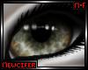 M! Snow Leopard Eyes