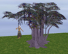 FCS Tree Swing ll Purple