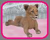 ( L ) Safari Baby Lion