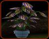 !   EXOTIC  PLANT  2