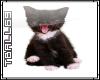 Black Kitten Sticker