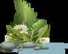 Pebbles Plant