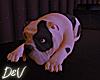 !D Blk & Wht Bulldog