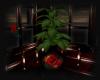 My Valentine Plant