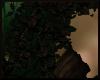 Dark Forest Boa 2