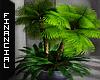 ϟ Indoor Palms