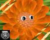 }T{Dancing FlowerOrange