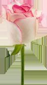 sticker_29514235_47554029
