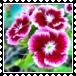 sticker_20503458_33971194