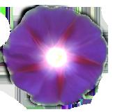 sticker_12905214_46810430