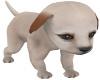 Ma's lil loving puppy