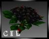 *C* Gothic Wedding Roses