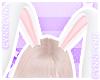🌠 Bunny Ears Pinku